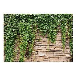 Wallpaper Mural Ivy Wall