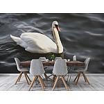 Wall mural mute swan