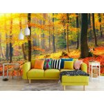Wallpaper Mural Colorful And Foggy Autumn Forest