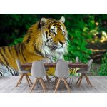 Wall mural amur tiger