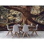 Wallpaper Mural Tree Root