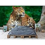 Photo wall mural a lankest leopard