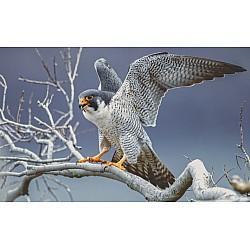 Photo wall mural falcon portrait