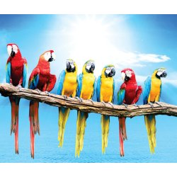 Photo wall mural flock of macaws
