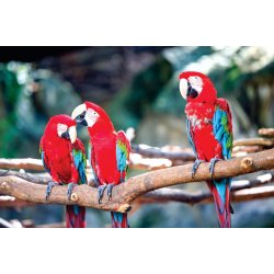 Photo wall mural macaw parrots stand on log