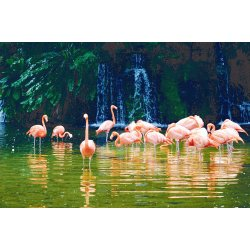 Wall mural pink flamingo birds in a pond