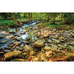 Wall mural forest stream