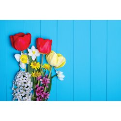 Wall mural tulips - wooden background