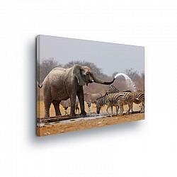 Animals & Living Canvas Photo Print (PP10093O1)