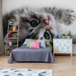 Cute Kitten Photo Wallpaper Mural (10203VE)