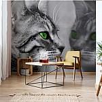 Cat Kitten Photo Wallpaper Mural (139VE)