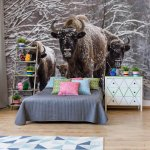 Buffaloes In The Snow Photo Wallpaper Mural (3669VE)