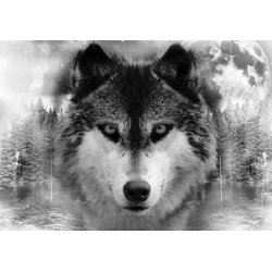 Forest Wolf In The Mist Photo Wallpaper Mural (10147VE)
