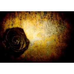 Designer Mural 13501V8 - Dark Rose