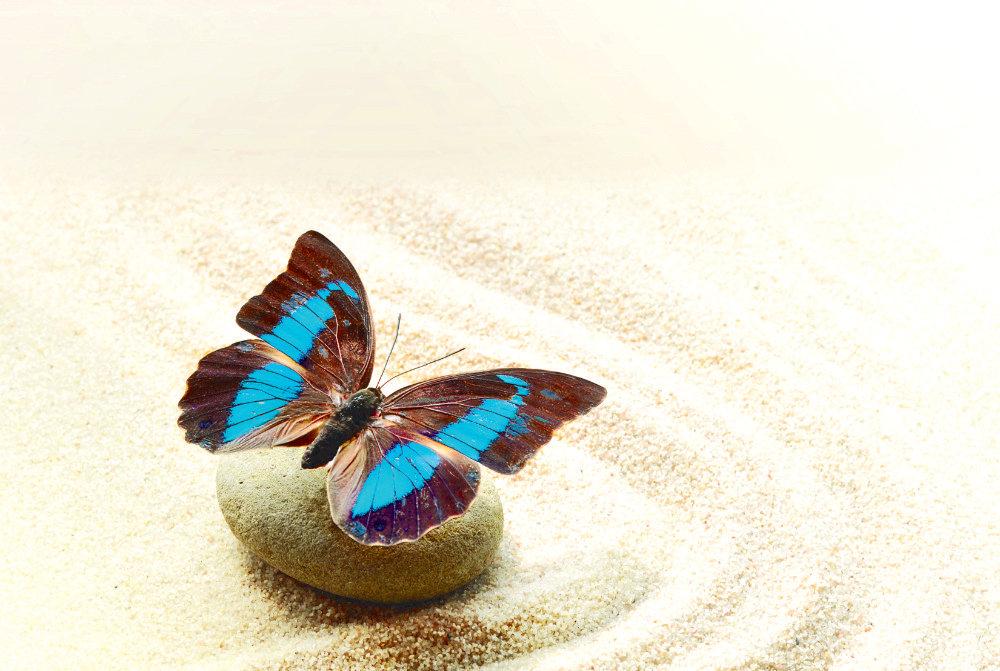 Wallpaper Mural Butterfly Prepona Laerte on the Sand (41978393)