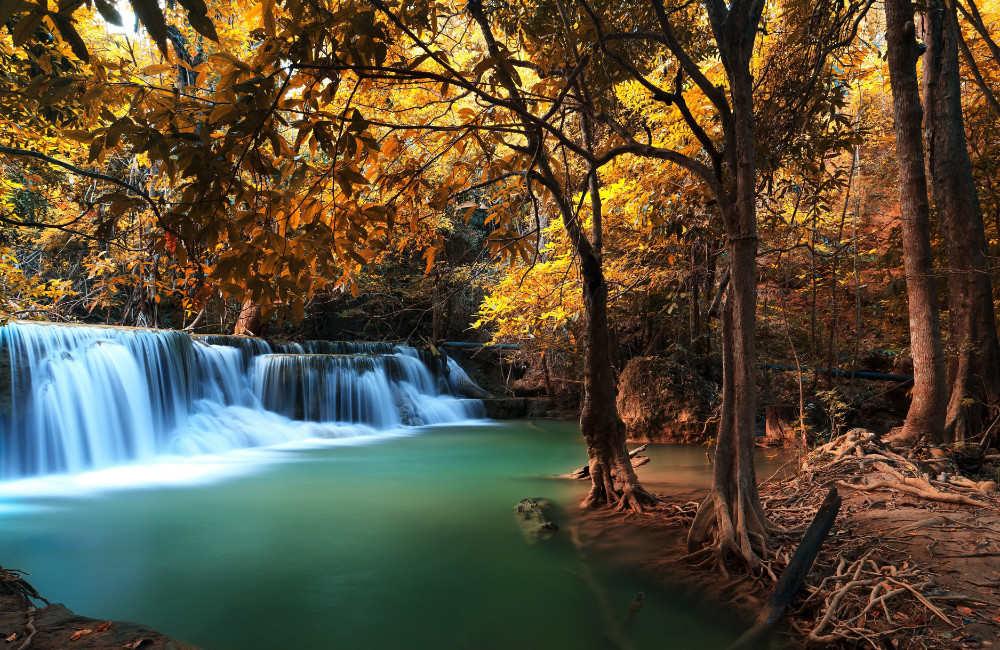 Wallpaper Mural Deep Autumn Forest Waterfall