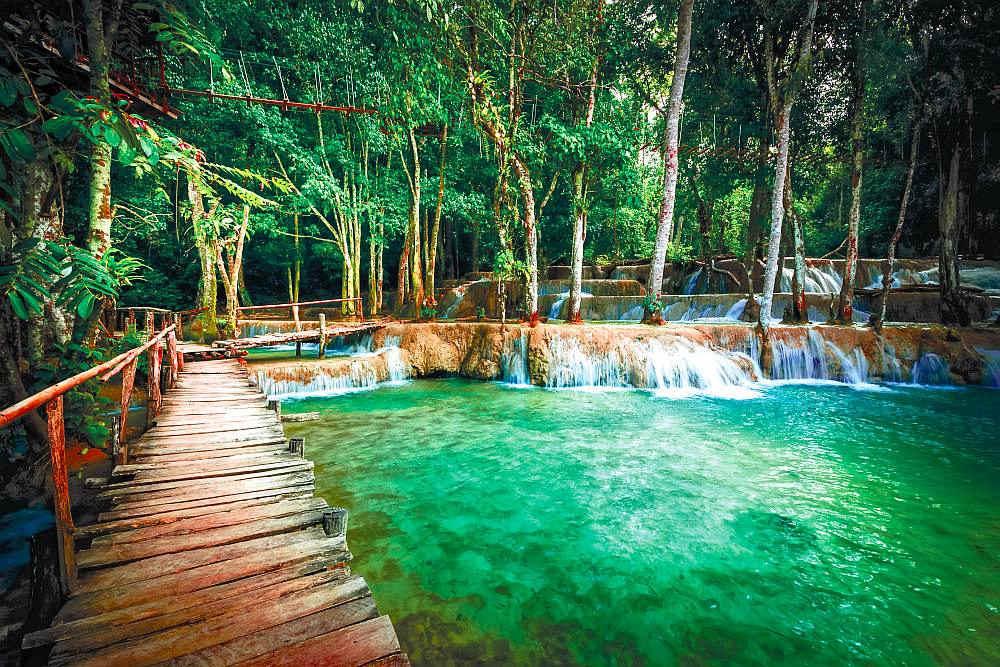 Photo Wall Mural Tropical Rainforest with a Wood Bridge