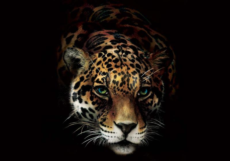 Jaguar Photo Wallpaper Mural (10148VE)